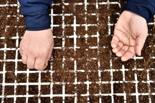 'Ata Tohumları' Toprakla Buluştu