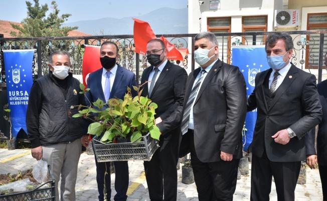Büyükşehir'den çiftçiye fidan desteği
