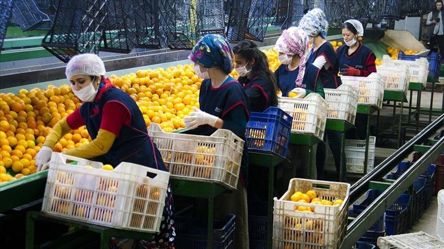 Yaş meyve sebze mamulü ihracatı 6 ayda milyar dolara yaklaştı
