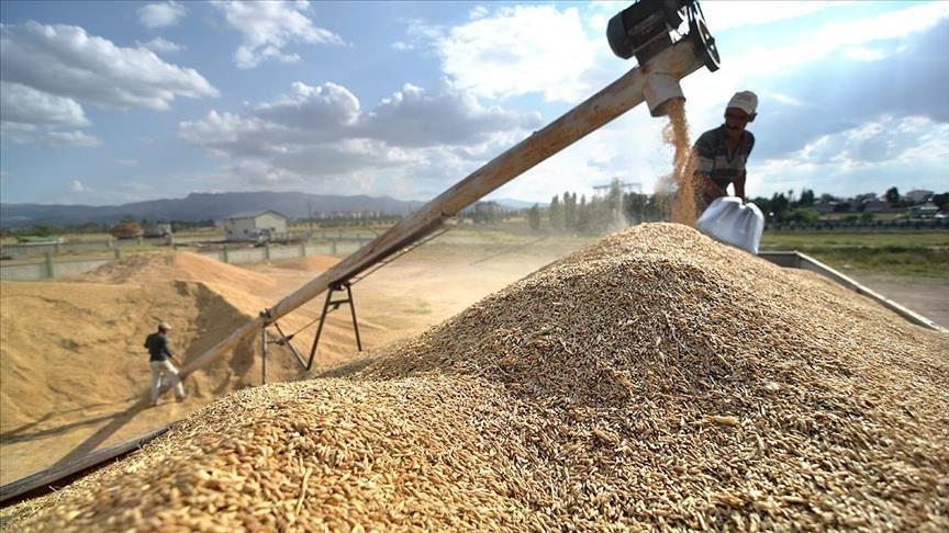 Bakan Pakdemirli: TMO eylülde 800 bin ton hububatı satışa açtı