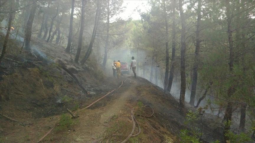 Balıkesir'de çıkan orman yangını kontrol altına alındı