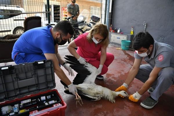 Dünyanın ilk hayvan hastanesinde şifa buldu