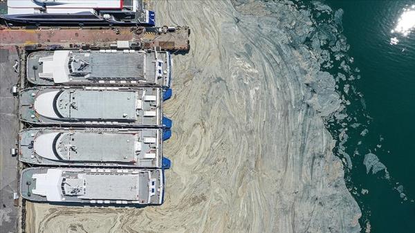 Marmara Denizi'ndeki müsilaj sorunu için laboratuvarda 'reaktif oksijen' çalışması deneniyor