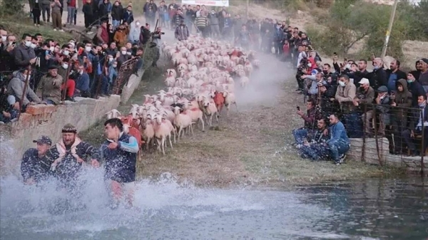 Burdur'da 750 yıllık 'sudan koyun geçirme' geleneği renkli görüntülere sahne oldu